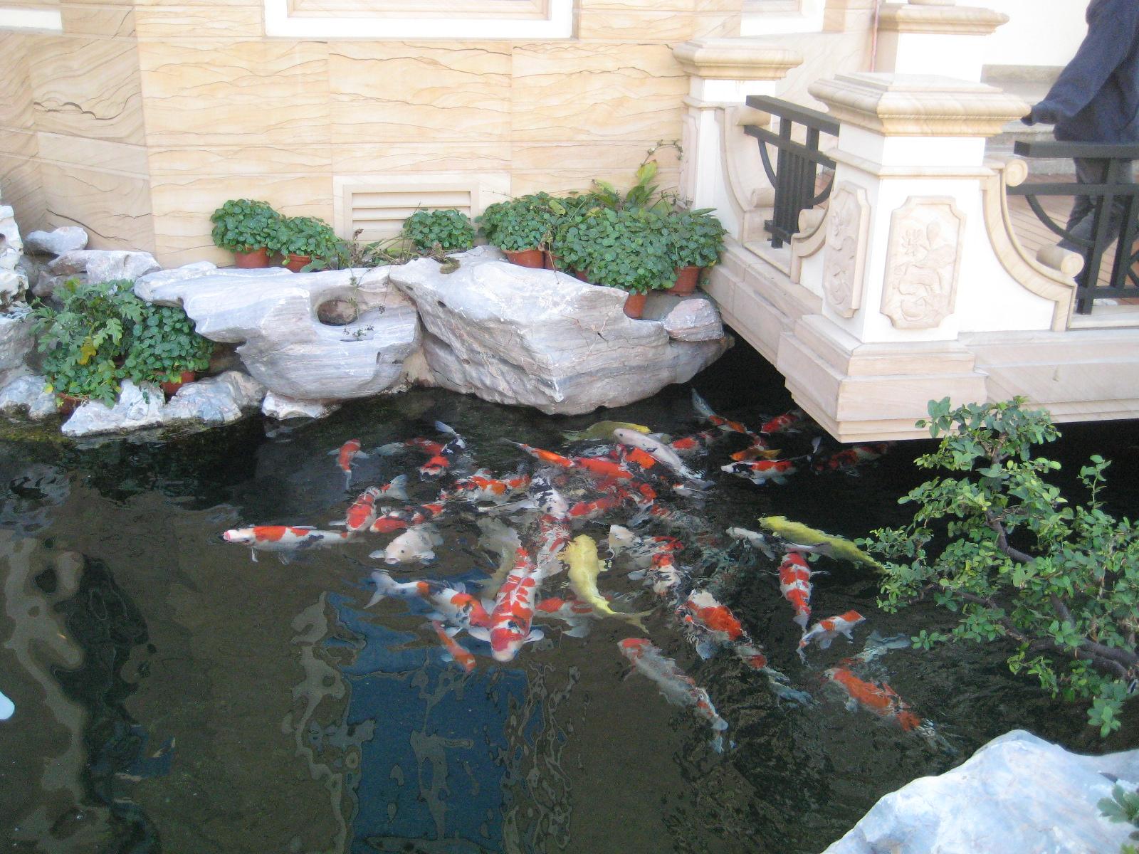 家庭花园鱼池效果图